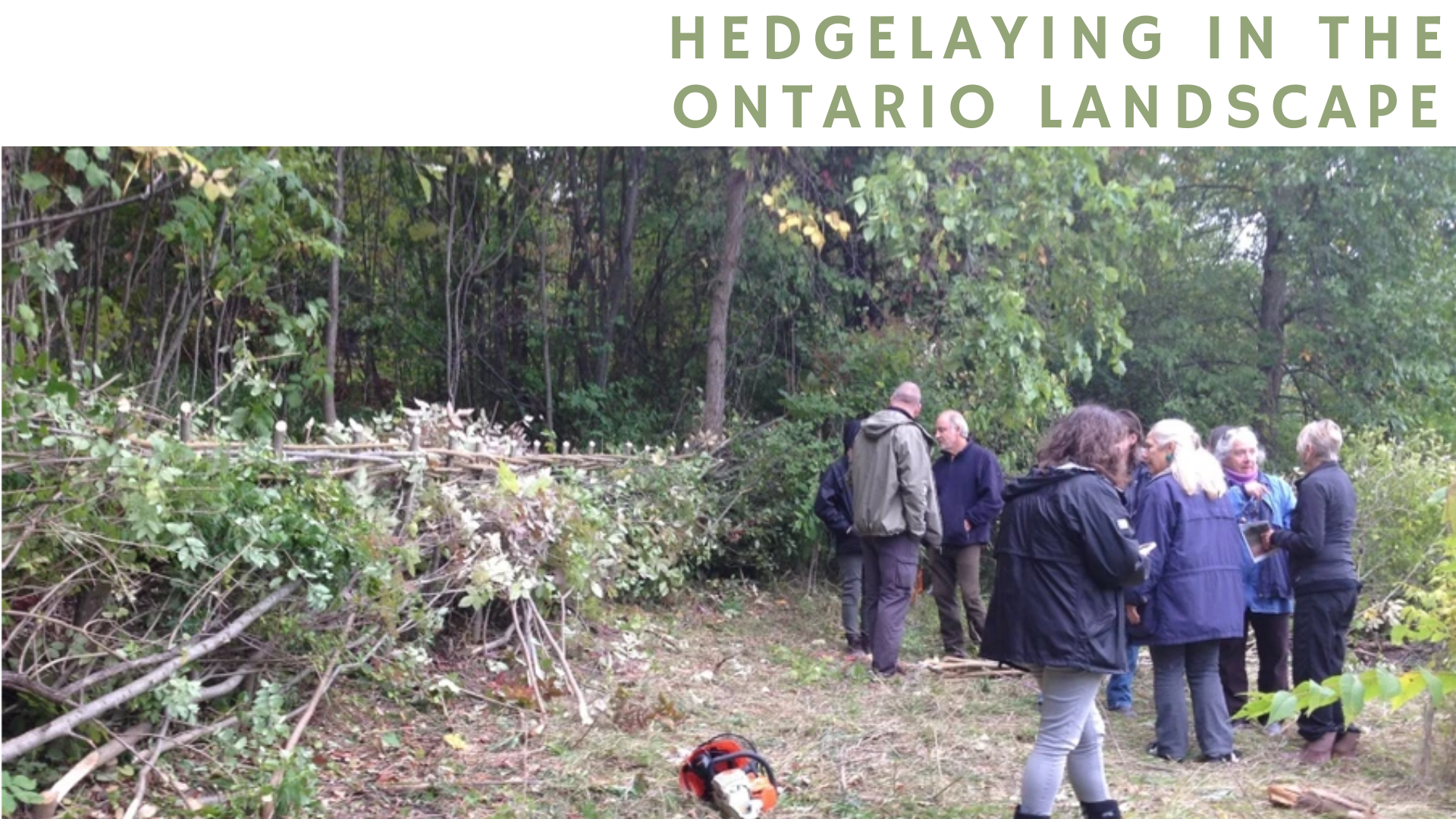 Hedgelaying in the Ontario Landscape